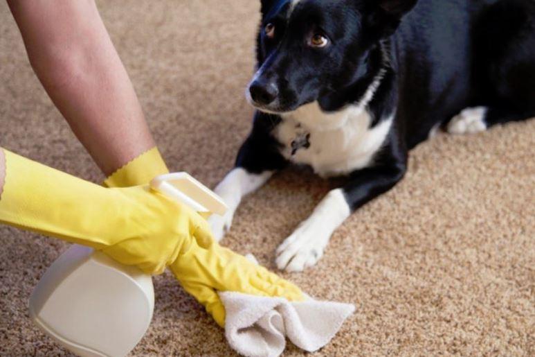 como limpiar orina de perro en alfombra