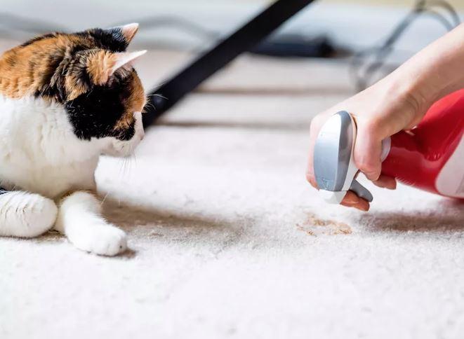 como limpiar pis de gato de la alfombra