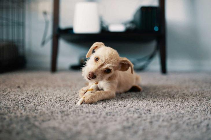 Limpiar pis del sofa como de perro
