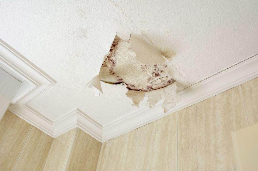 C mo quitar el moho en las paredes gu a eficaz - Como quitar el moho de los azulejos ...