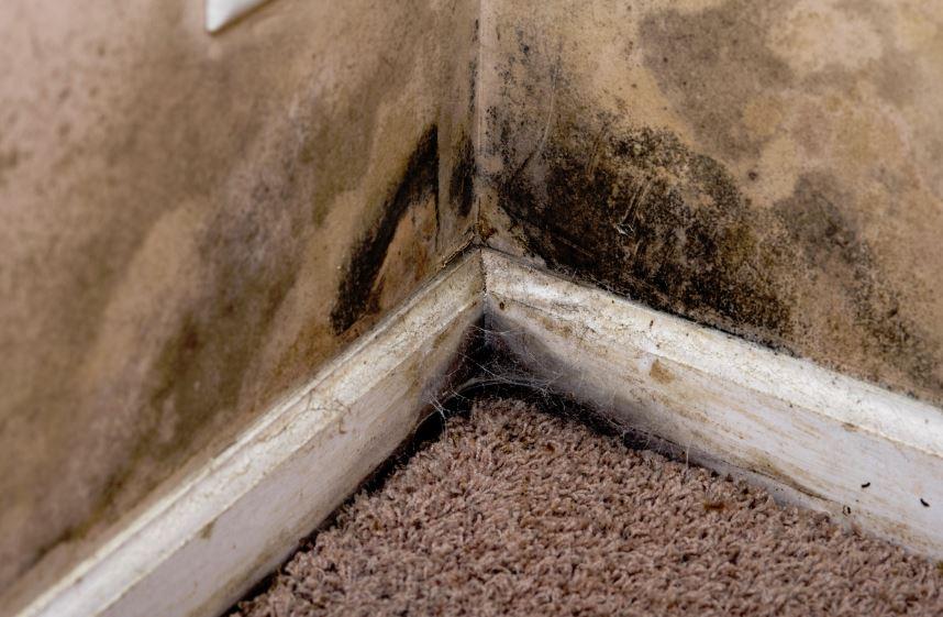 como quitar el moho de las paredes antes de pintar