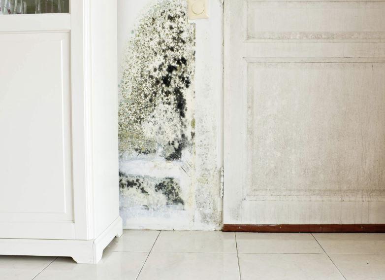 como quitar el moho de las paredes interiores