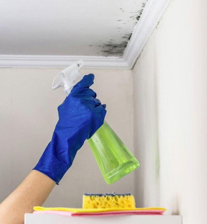 limpiador de moho para paredes