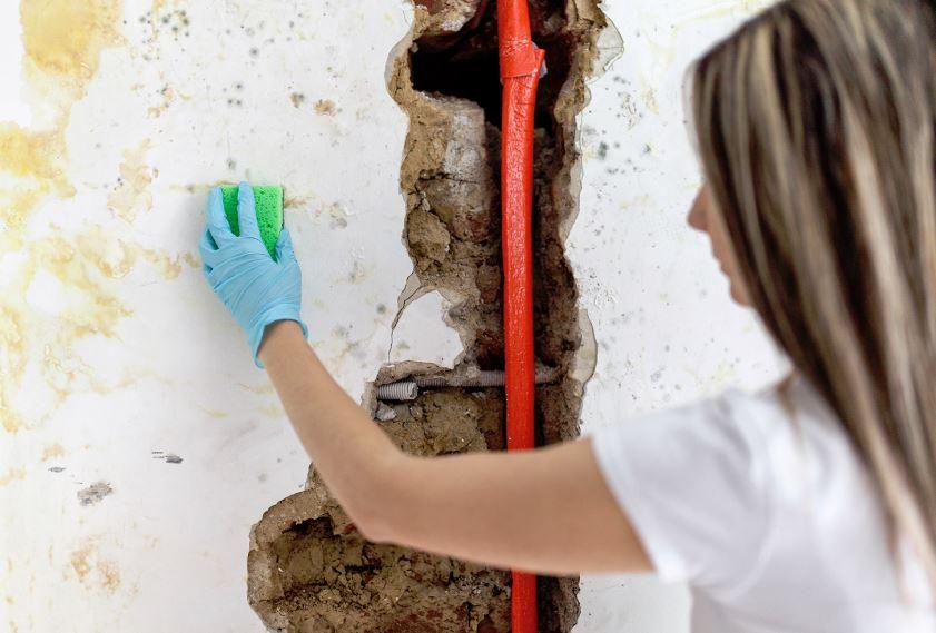 limpiar moho paredes pintadas