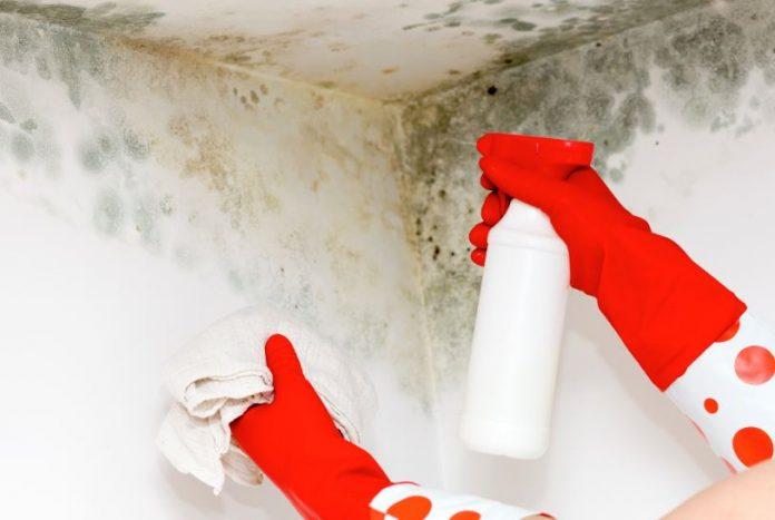 quitar moho paredes baño