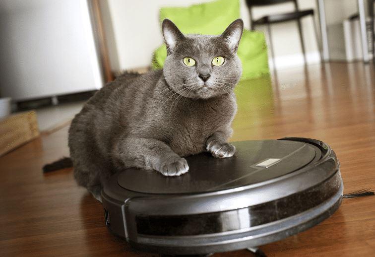 limpia pelos gato con robot aspirador