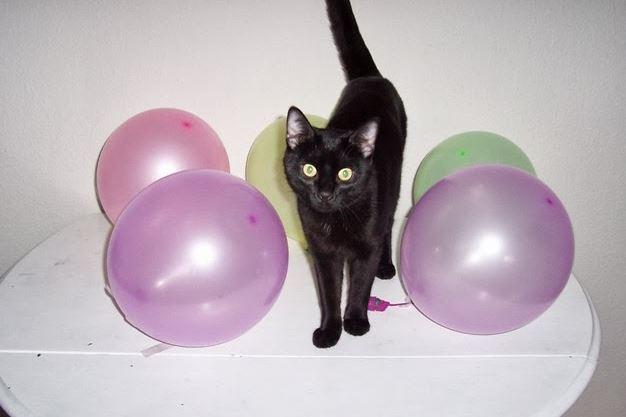 quitar pelos de gato con globos