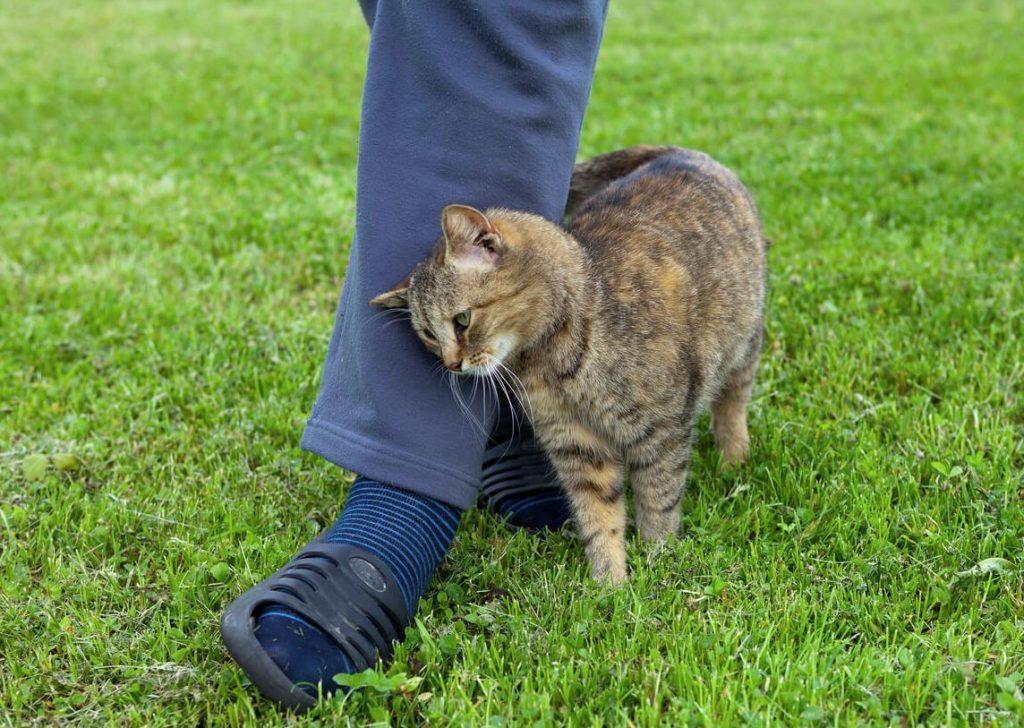 trucos para quitar pelos de gato de la ropa