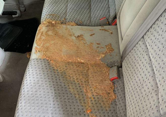 como limpiar el vomito de la tapiceria del coche