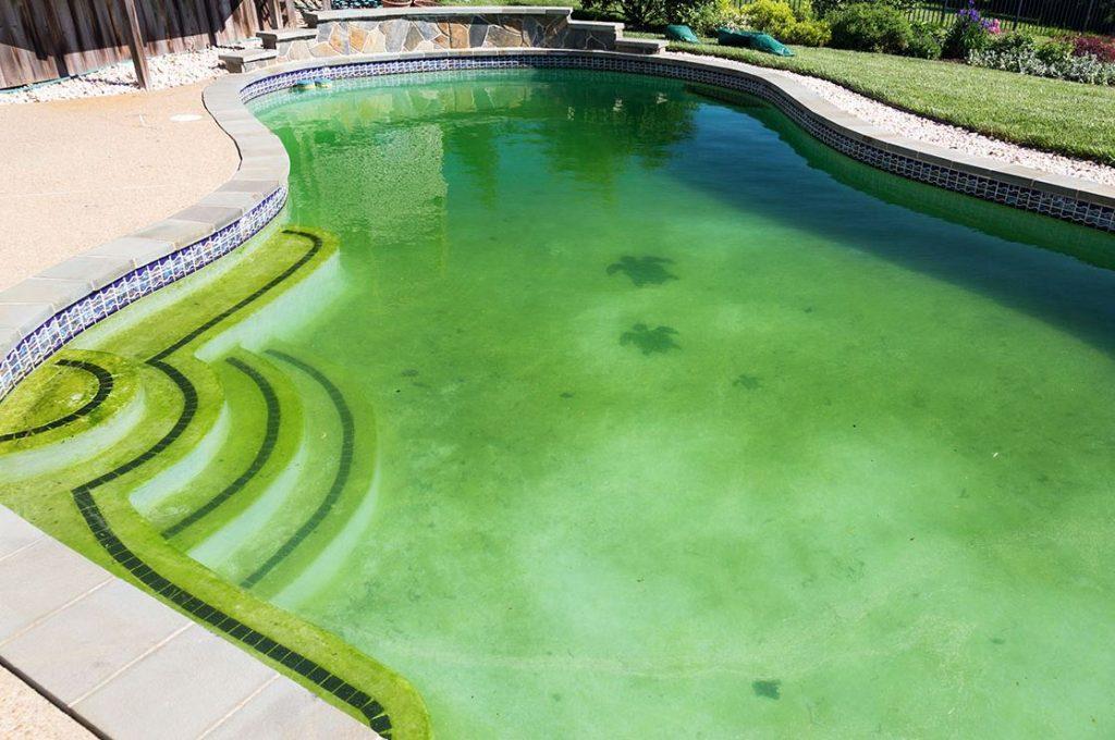 como limpiar las algas de la piscina